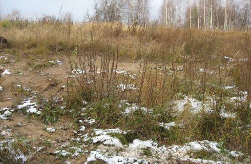 selo-selskaya-maza-lyskovskiy-rayon фото